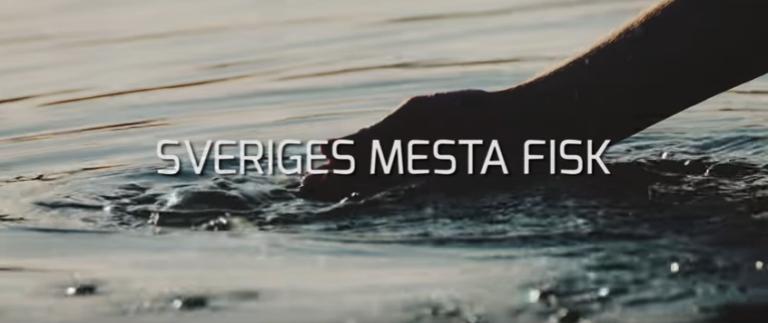 Sveriges Mesta Fisk – En utmaning till dig som sportfiskare!